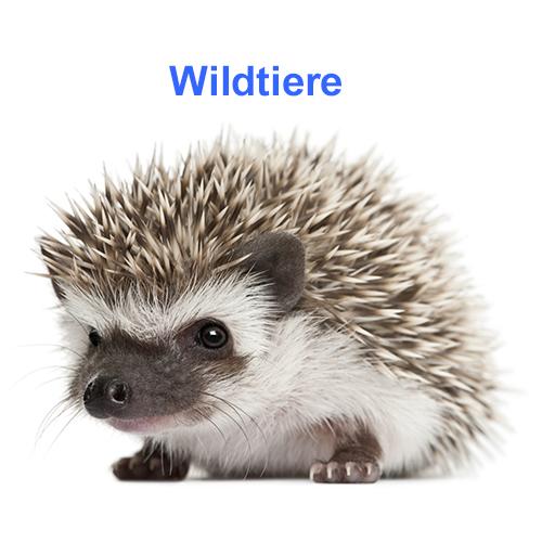 Wildtiere