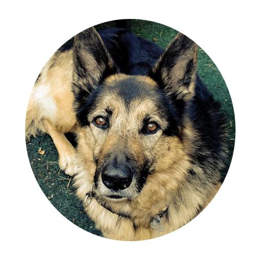 Fritz • der Praxishund