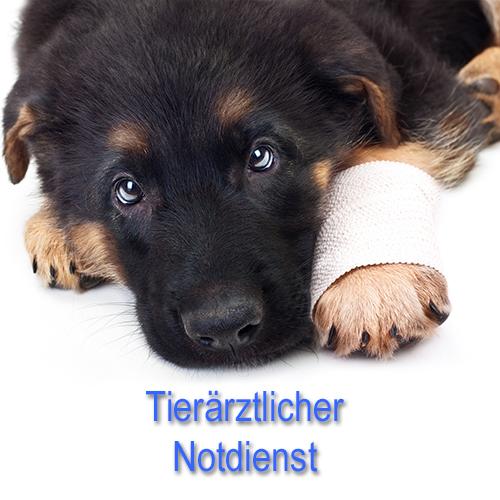 Kontakt zum tierärztlichen Notdienst